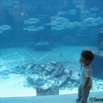 Our author goes all Bahama Mama when traveling to Atlantis with her son
